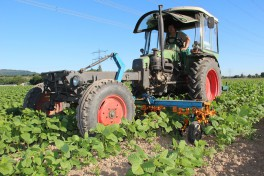A tractor in the edamame field