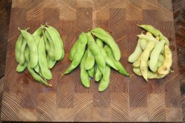 You see 3 batches of ripe Edamame beans, which are differently ripe.
