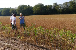 Three people in a conventional dry soya field