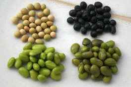 Edamame: Above seeds, below fresh seeds: Left variety Green Shell, right Hokkai Black.